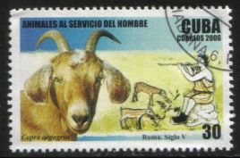 Chevre_Cuba